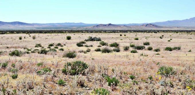 Round Island Road, Dolan Springs, AZ 86441