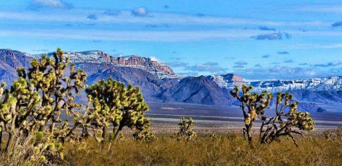 Lomila Drive, Dolan Springs, AZ 86441