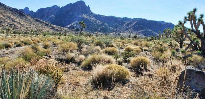 Nolan Drive, Dolan Springs, AZ 86441