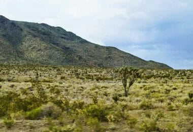 North Drive, Dolan Springs, AZ 86441