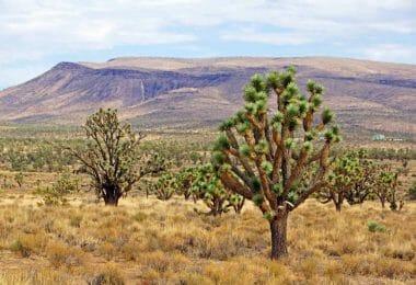 Santa Cruz Drive, White Hills, AZ 86445