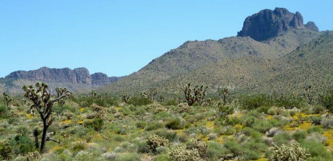 Hill Drive, Dolan Springs, AZ 86441